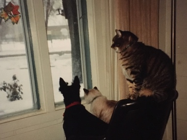 three at window